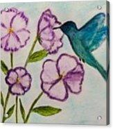 Hummingbird Blue Acrylic Print