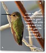 Hummingbird Christmas Card Acrylic Print