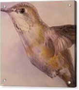 Hummingbird Acrylic Print by Crispin  Delgado