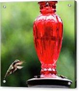 Hummingbird Feeder Acrylic Print