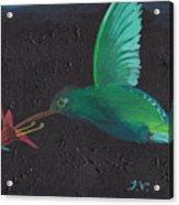 Hummingbird Feeding Acrylic Print by M Valeriano