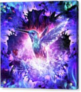 Hummingbird Love Acrylic Print