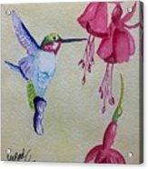 Hummingbird I Acrylic Print