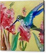 Hummingbird II Acrylic Print