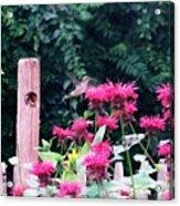 Hummingbird In Bee Balm Acrylic Print
