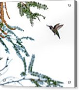 Hummingbird In Flight Isolated On White Sky Acrylic Print