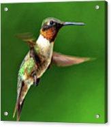 Hummingbird In Mid-air Acrylic Print