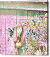 Hummingbird In The Garden Acrylic Print