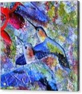 Hummingbird Joy Acrylic Print