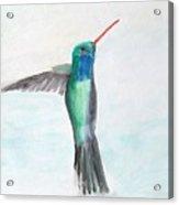 Hummingbird Painting Acrylic Print