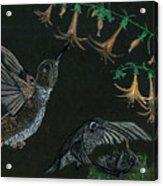Hummingbird Parents Acrylic Print