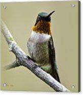 Hummingbird Portrait Square Acrylic Print