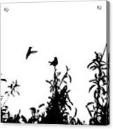 Hummingbird Silhouettes #1 Acrylic Print