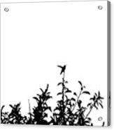 Hummingbird Silhouettes #2 Acrylic Print