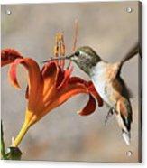 Hummingbird Whisper  Acrylic Print