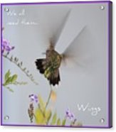 Hummingbird Wings Acrylic Print