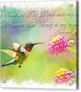 Hummingbird With Bible Verse Acrylic Print