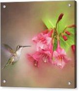 Hummingbird With Flowers Acrylic Print
