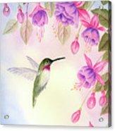 Hummingbird With Fuchsia Acrylic Print
