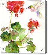 Hummingbird With Geranium Acrylic Print