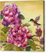 Hummingbird With Rhododendron Acrylic Print