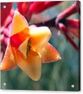 Hummingbird Yucca Acrylic Print