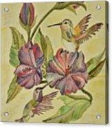 Hummingbirds And Hibiscus Acrylic Print
