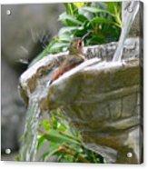 Hummingbirds Do Take Baths Acrylic Print