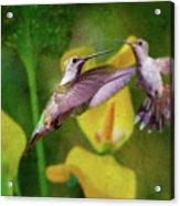 Hummingbirds In Virginia Acrylic Print