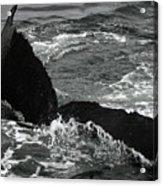 Humpback Whale Fluke 3 Acrylic Print