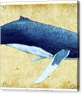 Humpback Whale Painting - Framed Acrylic Print