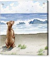 Hungarian Vizsla At The Beach Acrylic Print