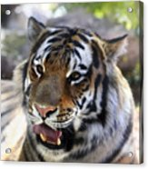Hungry Eyes Acrylic Print