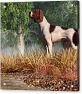 Hunting Dog By A River Acrylic Print