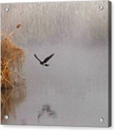 Hunting In The Mist Acrylic Print