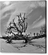 Hunting Island Beach And Driftwood Black And White Acrylic Print
