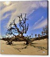 Hunting Island Beach And Driftwood Acrylic Print