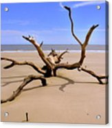 Hunting Island Beach Beaufort Sc Acrylic Print