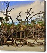 Hunting Island Driftwood Beach Beaufort Sc Acrylic Print
