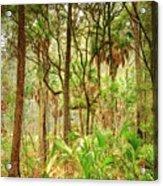 Hunting Island State Park Acrylic Print