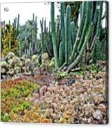 Huntington Desert Garden In San Marino-california Acrylic Print