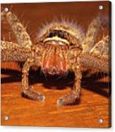 Huntsman Spider Acrylic Print by Joerg Lingnau