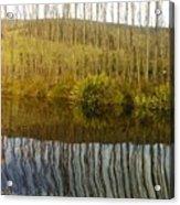 Huon Poplars Acrylic Print