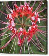 Hurricane Lily Acrylic Print