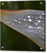 Hurricane Raindrops Acrylic Print