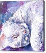 Hushabye Kitten Acrylic Print