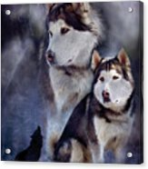 Husky - Night Spirit Acrylic Print