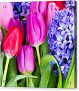 Hyacinth And  Tulip Flowers Acrylic Print