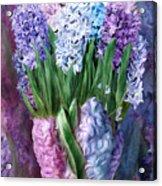 Hyacinth In Hyacinth Vase 1 Acrylic Print