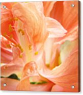 Hybiscus Interior Acrylic Print